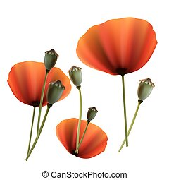 Set of Poppy green and red capsule on white background - Set...