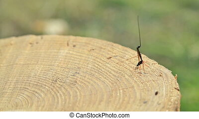 Dragon fly on stump, HD