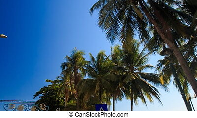 camera moves fast past large palm tops against sky - camera...