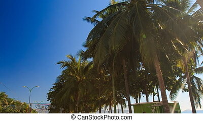 camera moves past palm embankment people walk rest by sea -...