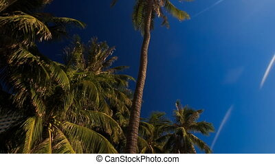 camera moves fast past large palm branches in Vietnamese...
