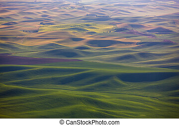 Palouse Hills - The rolling hills and fields of the Palouse...