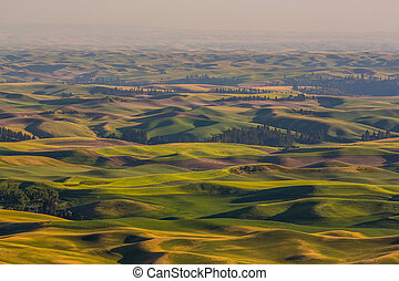 Palouse Fields