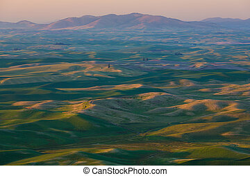 Palouse Fields - The rolling hills and fields of the Palouse...