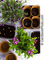 Planting flowers and vegetables at home