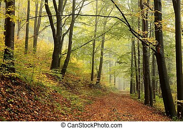 Autumn deciduous forest in misty weather