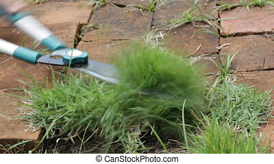 Gardener cutting leaves of grass with clippers, stock video