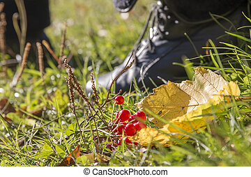 Red berries and autumn leaves on the grass in the park