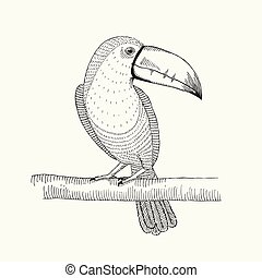 Hand drawn illustration of  toucan bird on the branch.