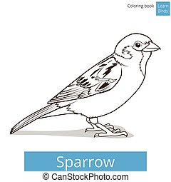 Sparrow learn birds educational game vector illustration