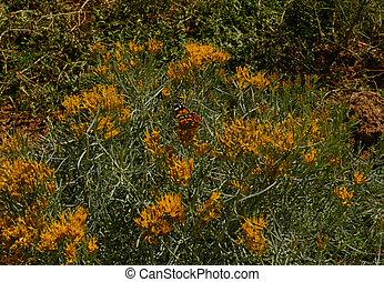 Butterfly in a field of flowers