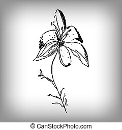 Vector lily flower. Illustration by hand. Monochrome...