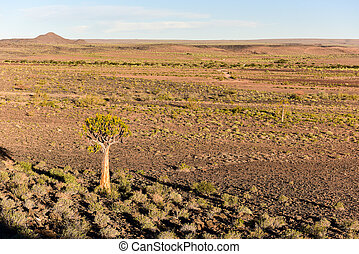 Fish River Canyon -Namibia, Africa - Quiver tree in the Fish...