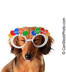 Happy Birthday puppy - Funny Happy Birthday dachshund puppy...