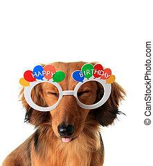Happy Birthday puppy - Funny Happy Birthday dachshund puppy...