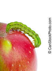 Big green caterpillar crawling over the red apple isolated...
