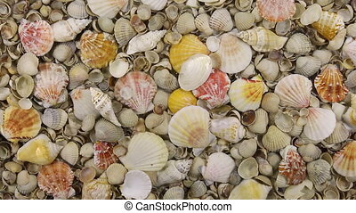 Fall seashells in water with shellsHD