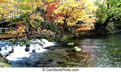 Autumn landscape creek in a autumn wood