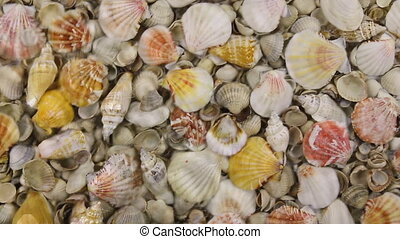 Wind along the coast with sea shells, approximation,...