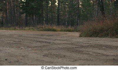A rally car in the forest - A rally car swiftly taking a...