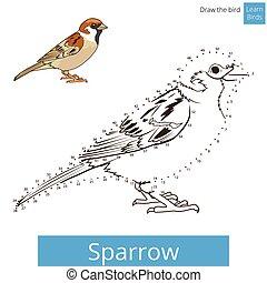 Sparrow bird learn to draw vector - Sparrow learn birds...