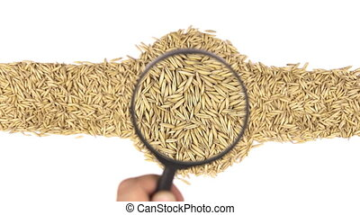 Magnifying glass increases the oats grains, motion up
