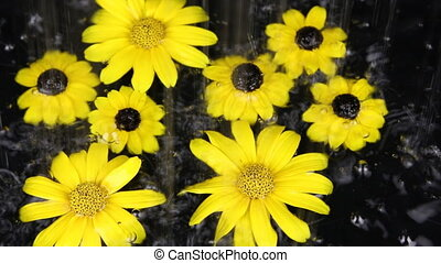 Yellow flowers in the water under the rain
