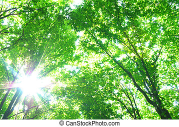 sun in forest - Early morning sun in the green forest
