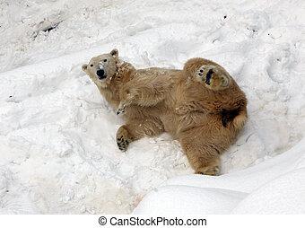 Polar bear on the snow in zoo