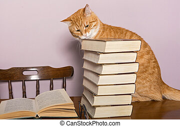 Beautiful orange cat sits and looking book - Beautiful...