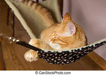 Happy red cat sleep in a fur hammock - Happy ginger cat...