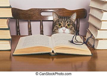 Beautiful grey cat sits and looking book - Beautiful grey...