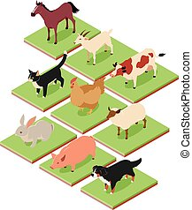 Domestic isometric animals - Vecto image of the Domestic...