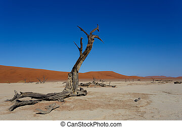 beautiful sunrise landscape of hidden Dead Vlei in Namib,...