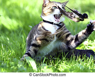 cat was hunting - A cat was hunting a Bird and is now eating...