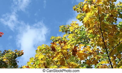 clouds in the blue sky over bright autumn trees