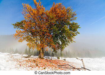 Colorful autumn trees with snow. The Ukraine