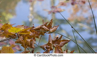 sprig of wilted leaves on the background of blue lake