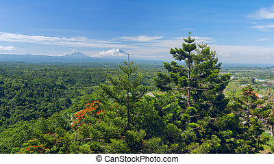 Pine trees on background of the Balinese landscape