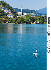Bled Slovenia - Swan on Bled lake in Slovenia with old...