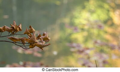 sprig of wilted leaves on the background surface of the lake...