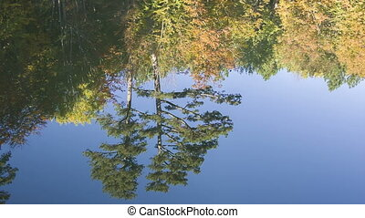 reflections of forest on a lake