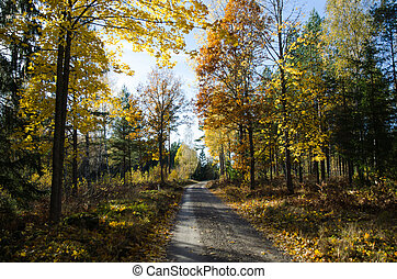 Colorful gravel road - Countryside gravel road through a...