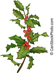 Holly branch with berries. Christmas traditional symbol