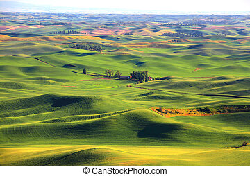 Rolling hills from Steptoe butte in Washington state
