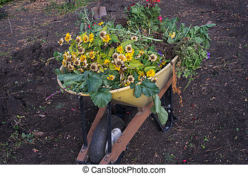 Fall garden clean up - Garden plant loaded in wheelbarrow...