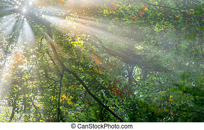 sun rays through the foliage in the forest