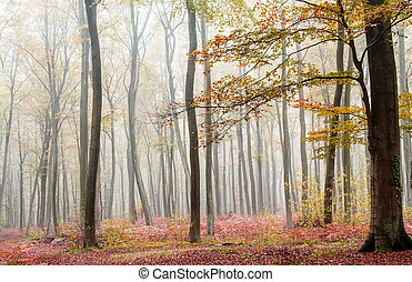 misty forest in fall season