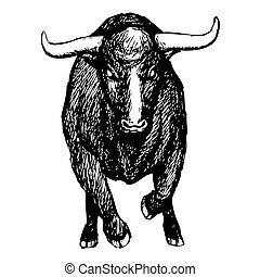 bull on white background