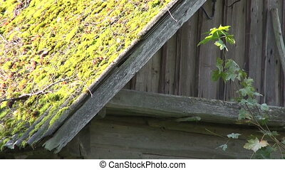 Old farm barn with mossy roof - Old desolate wooden barn...